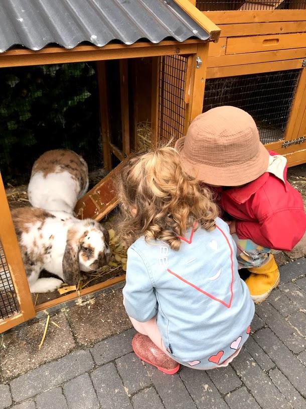 website foto konijnen